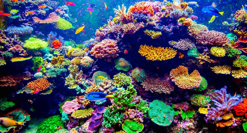 Reef,Coral reef,Natural environment,Stony coral,Coral,Marine biology.
