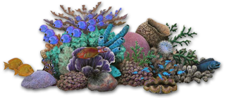 Coral reef fish, backgrounds PC.