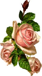 More Free Graphics of Roses.