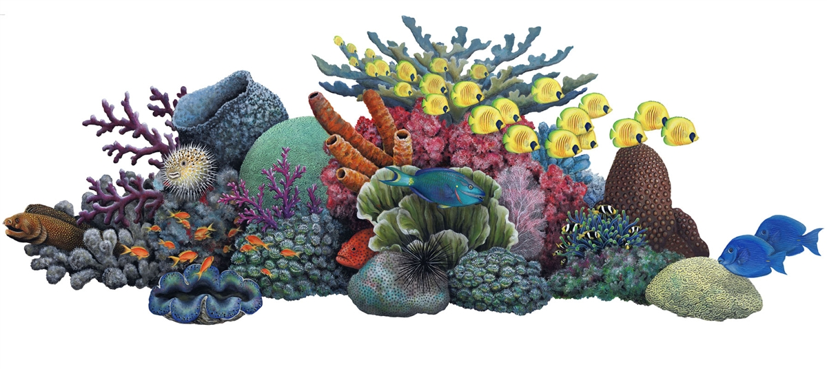 Images coral reef clipart.