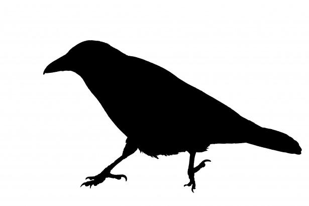 Corbeau, Clipart Silhouette d'oiseau Photo stock libre.