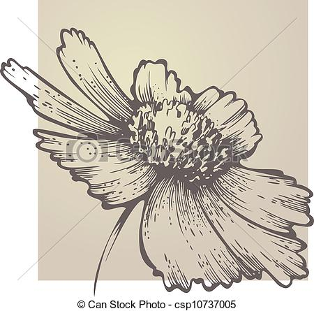 Vector Clipart of flowering Coreopsis csp10737005.