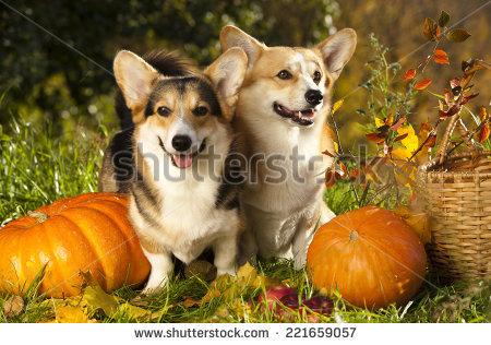 Dog Pumpkin Stock Photos, Royalty.