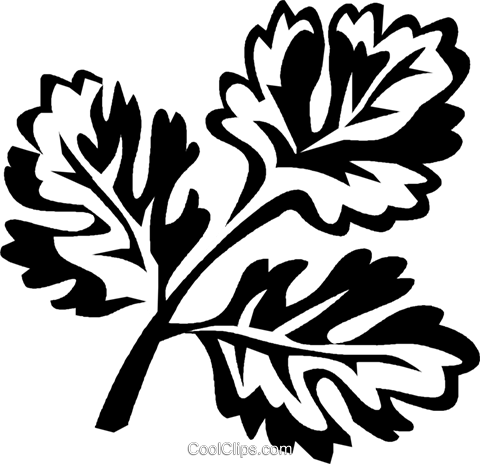 coriander Royalty Free Vector Clip Art illustration.