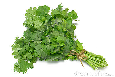 Cilantro (Parsley) Stock Image.