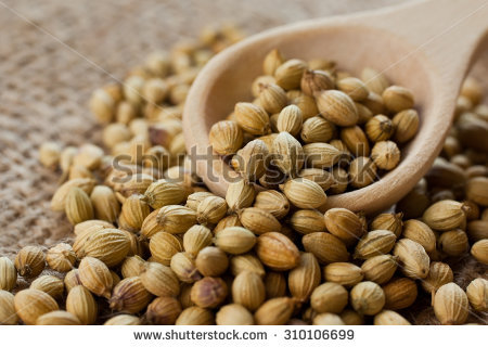 Coriander Stock Images, Royalty.