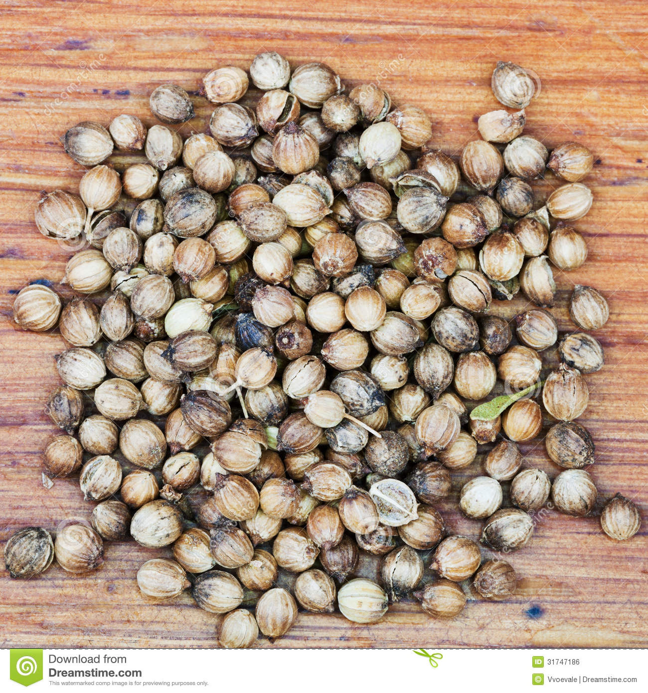 Dried Coriander Fruit Seeds Royalty Free Stock Image.