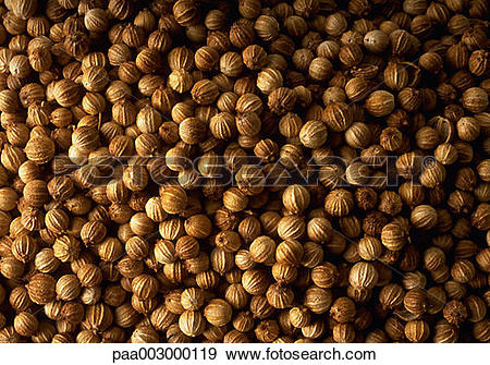 Stock Photograph of coriander, spice, spices, product, produce.