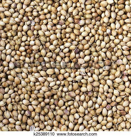 Stock Photography of Coriander seeds k25389110.