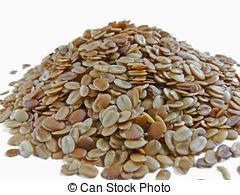 Stock Image of Coriander Seeds (Coriandrum sativum).