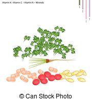 Coriandrum sativum Clipart and Stock Illustrations. 34 Coriandrum.