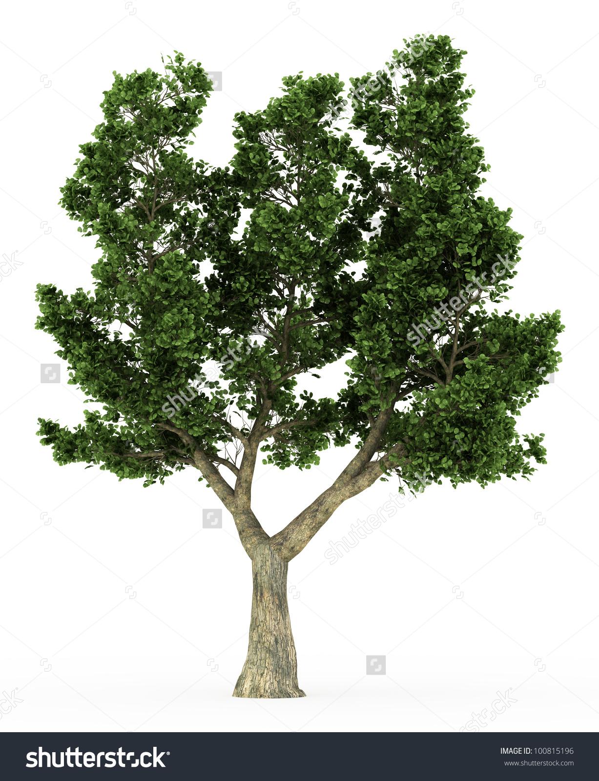 3d Cork Oak Tree Isolated Over Stock Illustration 100815196.