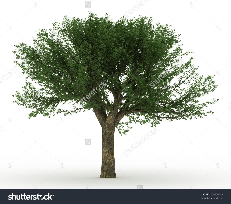 3d Cork Oak Tree Isolated Over Stock Illustration 100600732.
