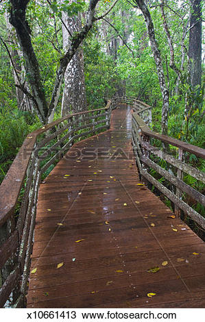 Stock Photo of USA, Florida, boardwalk in Corkscrew Swamp.