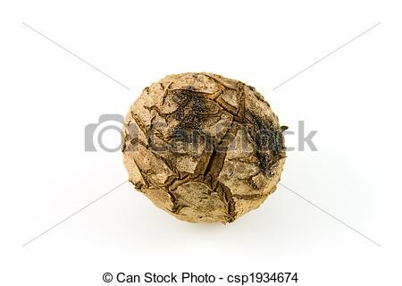 Stock Photo of Corm.