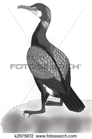 Clip Art of Great Cormorant k2975872.