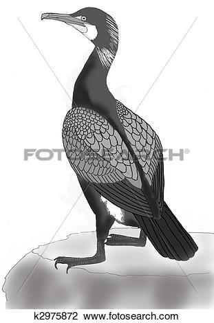 Clip Art of Great Cormorant k2975872.
