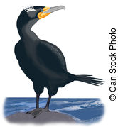 Cormorant Clipart and Stock Illustrations. 158 Cormorant vector.