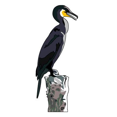 Cormorant clipart #16