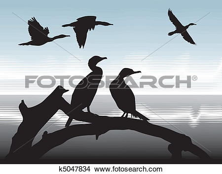 Clipart of Cormorants on lake shore k5047834.