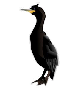 Cormorant Clip Art Download.