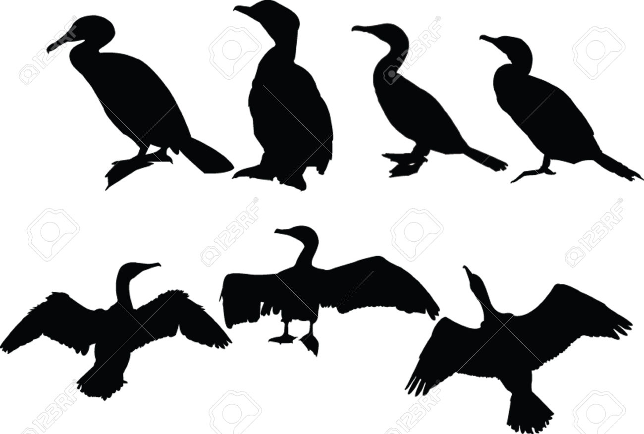 Cormorants Collection Royalty Free Cliparts, Vectors, And Stock.