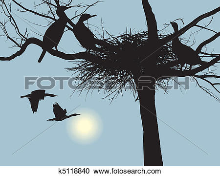 Clipart of Nesting cormorants k5118840.