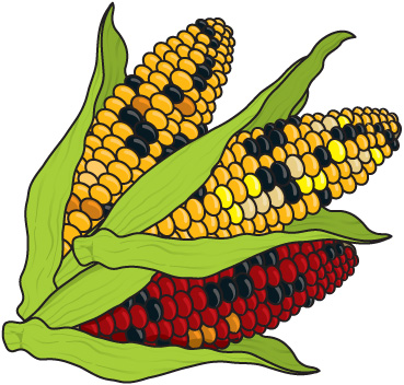 Indian corn clip art.