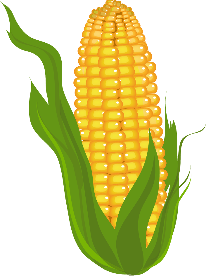 Maize varieties clipart #3