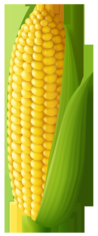 Corn clipart - Clipground