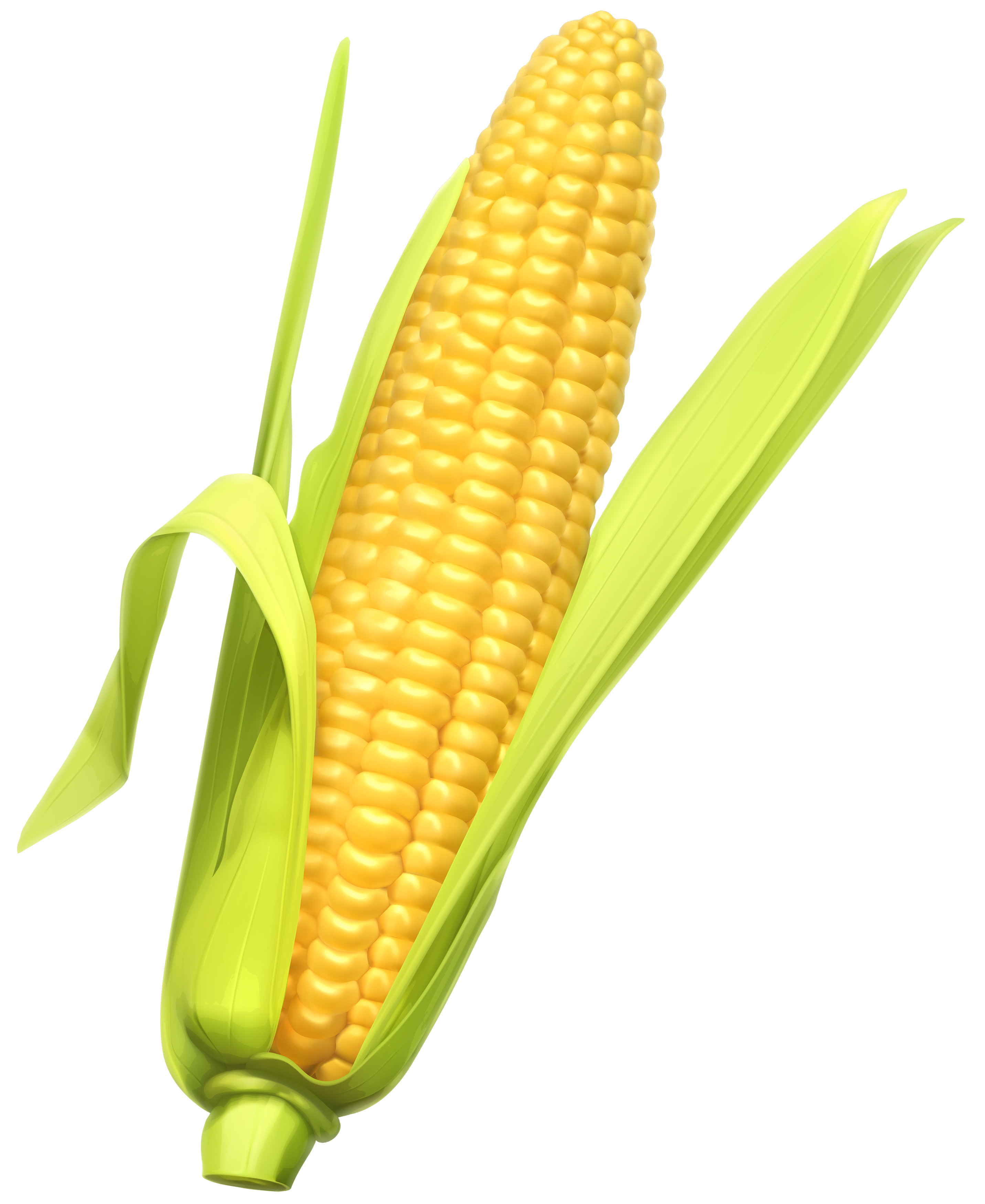 Maize types clipart #3