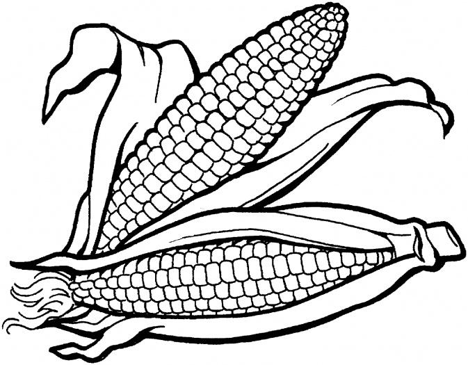 Maize clipart #7