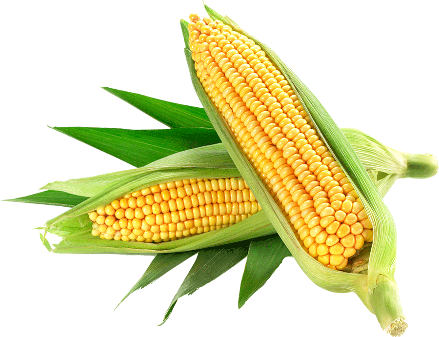 Corn Yellow PNG, Corn Clipart Images Free Download.