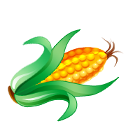Corn cob clipart 20 free Cliparts | Download images on ...