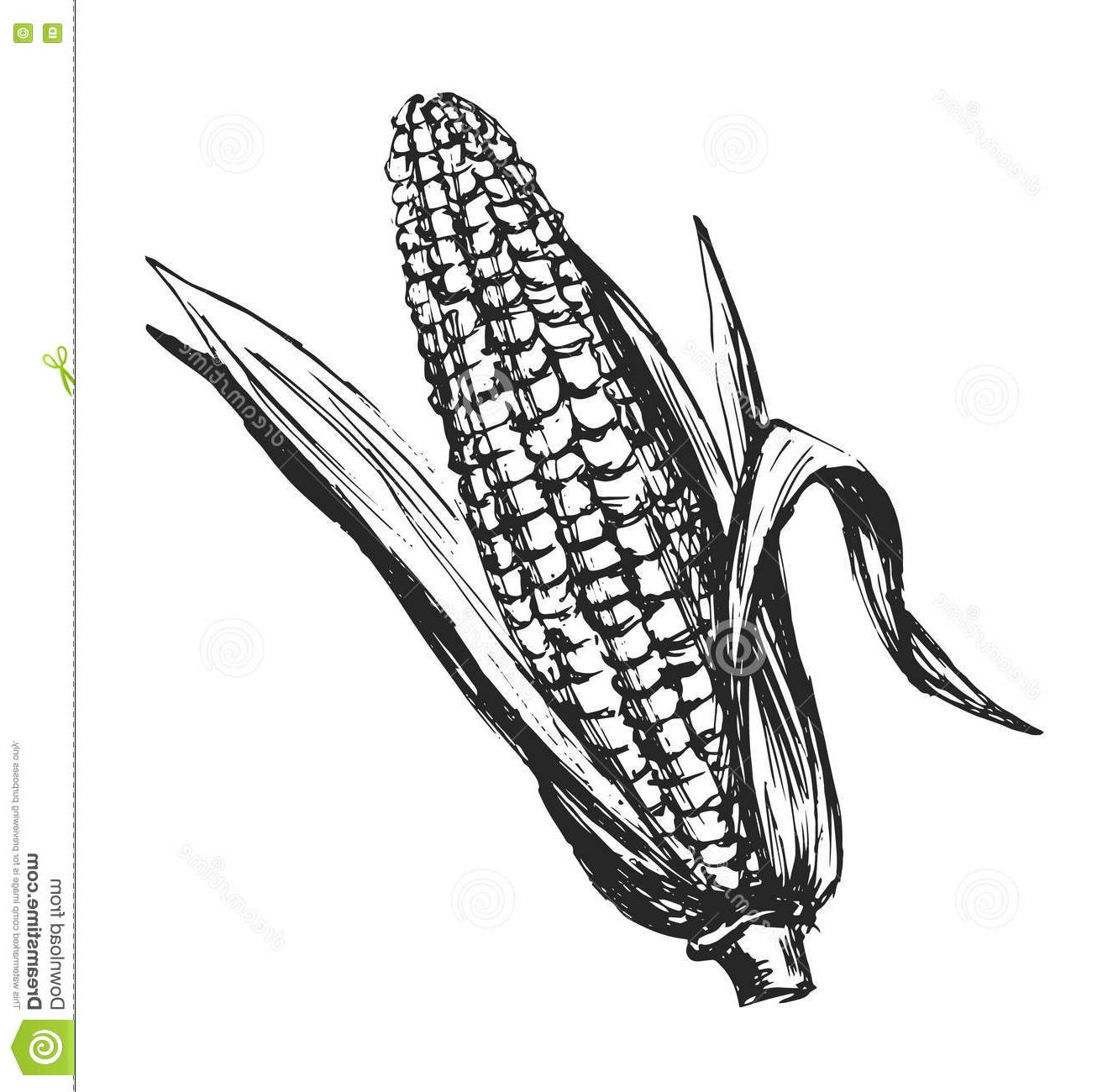 HD Corn Vector Black And White Cdr » Free Vector Art, Images.
