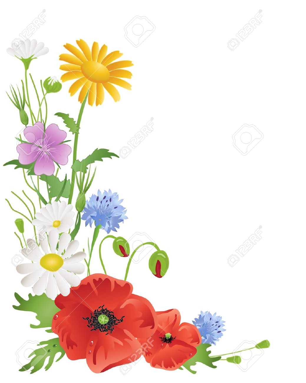 An Illustration Of An Arrangement Of Annual Wildflowers With.