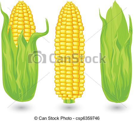 Clip Art Vector of Ears of ripe corn, agricultural, reaped crop.