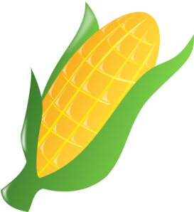 Clipart ear of corn.