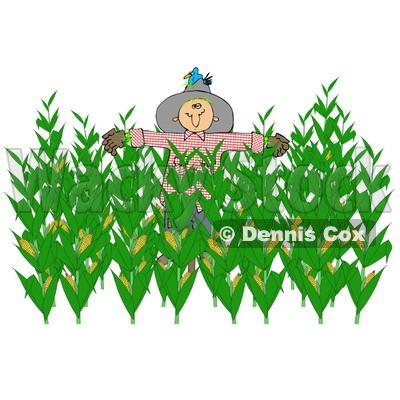 Maize cultivation clipart #13