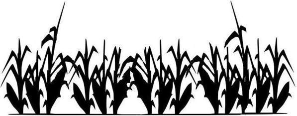 Corn field clipart - Clipground