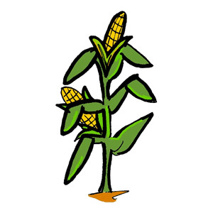 Maize cultivation clipart #11