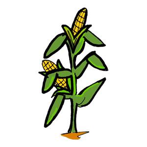 Maize cultivation clipart #11