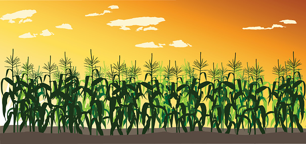 Sweet Corn Clip Art, Vector Images & Illustrations.