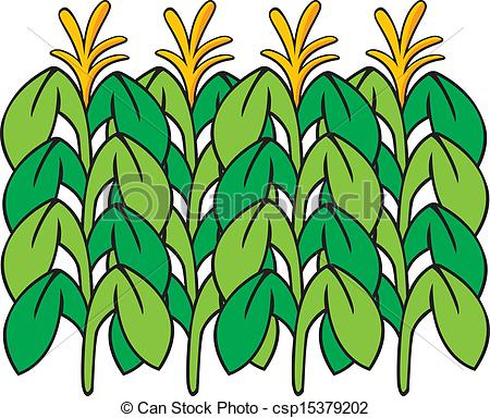 Maize field clipart #6