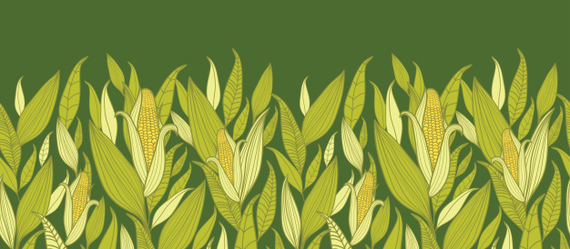 Maize fields clipart #8