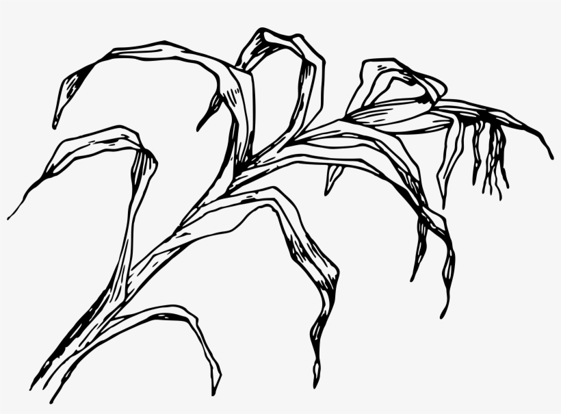 Download Cornfield Drawing Easy.