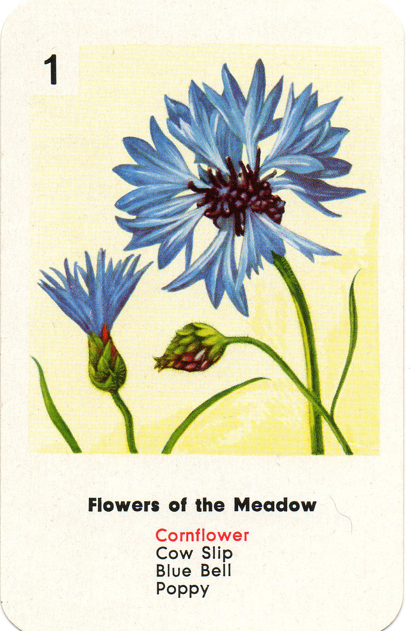 Leaping Frog Designs: Flower Clip Art Free Images Cornflower White.