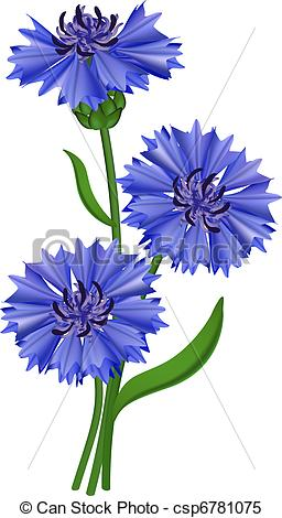 Clipart Vector of Flowers blue cornflower. Vector illustration.