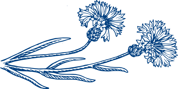 Darker Blue Cornflower Clip Art at Clker.com.