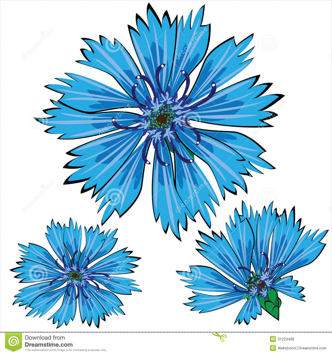 Blue Cornflower Flowers Isolated On White Royalty Free Stock.